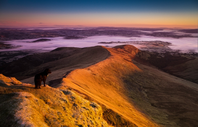 My loyal dog Franky looking towards Brecon from Pen Y Fan. By Anthony Pease ©