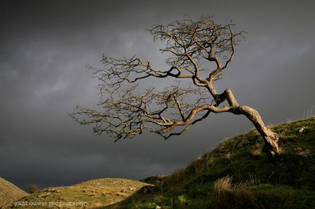 Hawthorn on the Black Mountain. By Mari Owen - Photographer ©