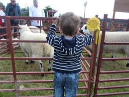 Young Boy At Fence