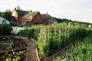 Griffin Vegetable Patch © By Felin Fach Griffin