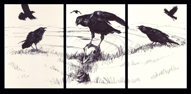 Ravens © Chris Townsend