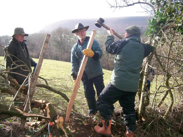 Hedge Laying © Good Day Out