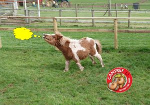 Cantref Adventure Farm ©
