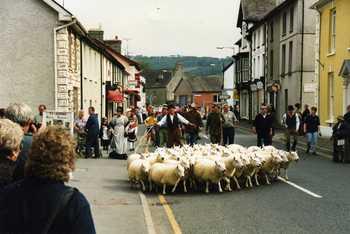 sheep97004